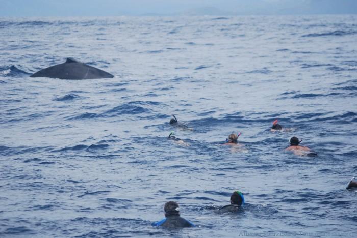 à mettre sur siteapproche en groupe de la baleine
