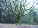 31 mai et 1er juin 2014  Parcours initiatique en forêt de Brocéliande