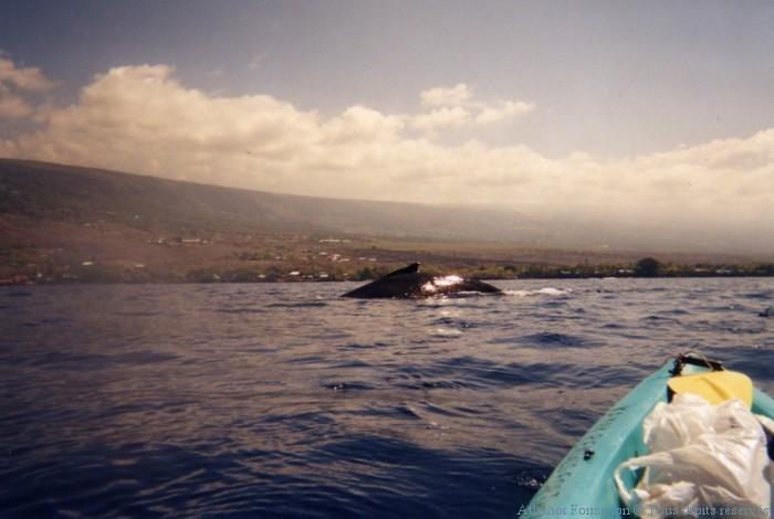 approche-de-la baleine en kayak