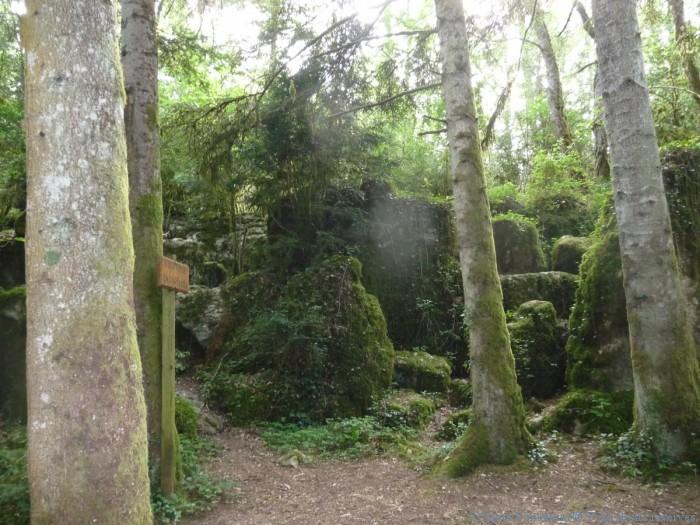 forêt des fées