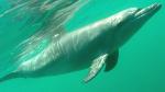 Du  18 septembre au 3 octobre 2017  - Séminaire initiatique à Mayotte - Rencontre avec les dauphins et les baleines
