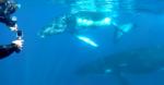 Du  1er au15 septembre 2019  - Séminaire initiatique à la Réunion - Rencontre avec les dauphins et les baleines