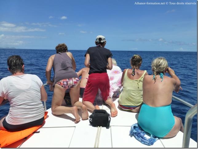 stage-initiatique-nage-avec-les-dauphins