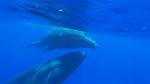 15-30 septembre 2014 - Séminaire initiatique à Mayotte - Rencontre avec les dauphins et les baleines