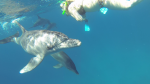 Du 12 au 27 mai 2016 séminaire initiatique à la  rencontre des dauphins  en mer Rouge et des Bédouins dans le désert du Sinaï