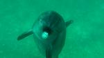 Du 9 au 23 mai 2017 séminaire initiatique à la  rencontre des dauphins  en mer Rouge et des Bédouins dans le désert du Sinaï